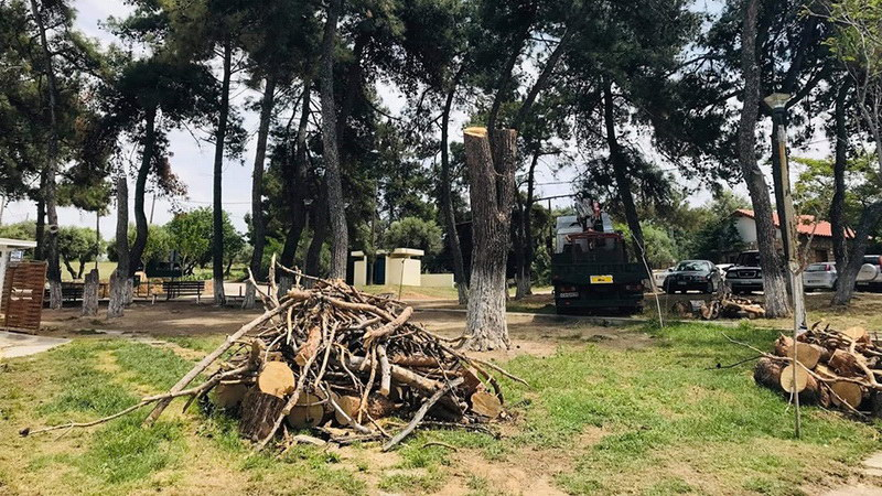 Ο Δήμος Αλεξανδρούπολης ουδεμία σχέση έχει με την κοπή δέντρων στην Αγία Παρασκευή Μάκρη