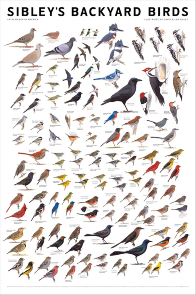 Sc Bird Identification Chart