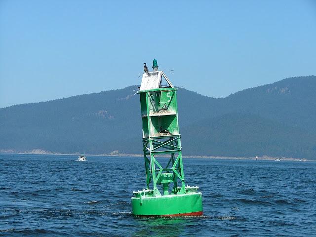 Guemes Channel sea birdhouse