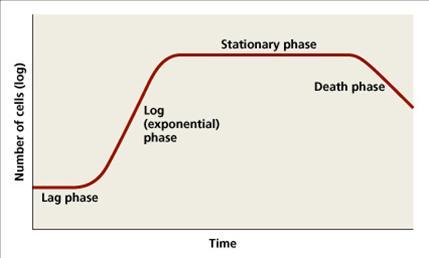 Bacterial growth curve graph