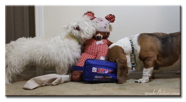 Westie and basset playing doctor with a teddy bear