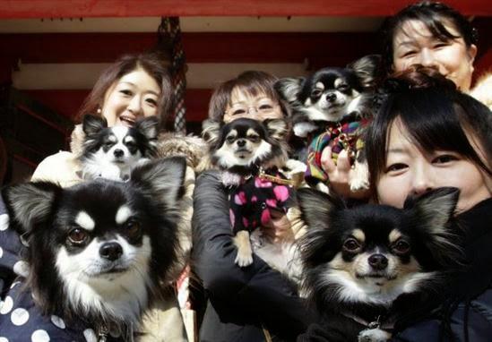 Ada lebih banyak hewan peliharaan dibanding anak – anak di Jepang.