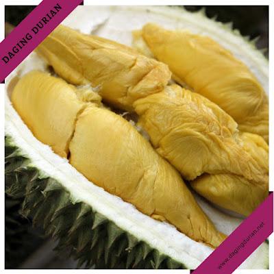 pabrik-daging-durian-medan-terharum-di-batu