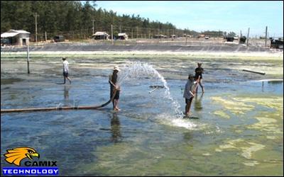 Công ty xây dựng hệ thống xử lý nước thải nhà máy chế biến thủy sản -  Nuôi biển khổ vì ô nhiễm