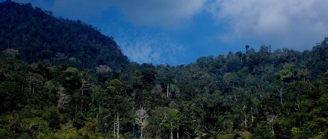 hutan adalah suatu kumpulan pohon-pohon yang rapat dan menutup areal Cukup luas sehingga dapat membentuk iklim mikro yang kondisi ekologisnya sangat khas dan berbeda dengan areal luarnya.