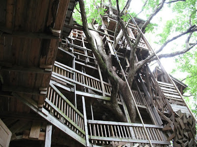 The World's Biggest Treehouse (14) 7