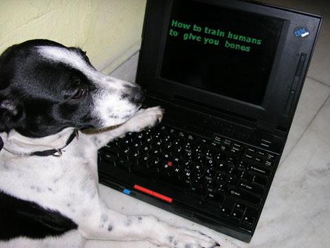 σωστη επιβραβευση στην εκπαιδευση των σκυλων