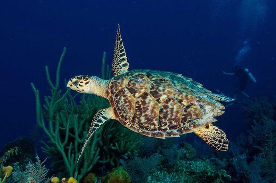 Konservasi Penyu Pulau Harapan