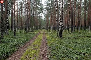 Дорога от Волковни на Каменку