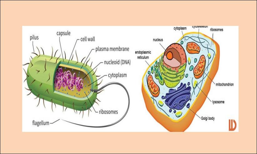 Perbedaan Sel Prokariotik Dan Eukariotik Pengetahuan Alam