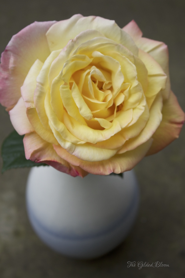 Early Summer Roses- www.gildedbloom.com