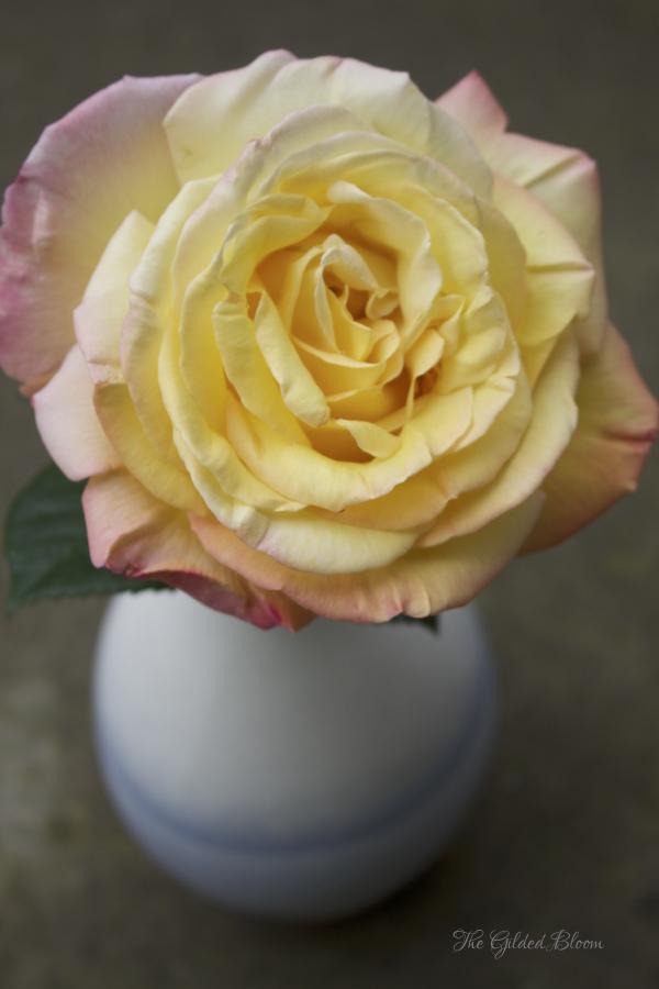 Early Summer Roses- www.gildedbloom.com