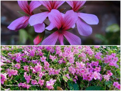 Flores en el jardín / Macachines - Chacra Educativa Santa Lucía