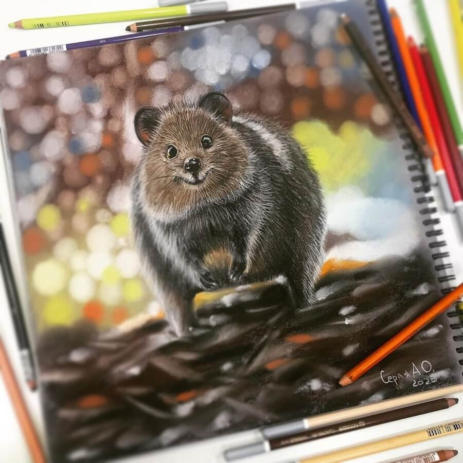 08-The-lovely-Quokka-Anastasia-Gray-www-designstack-co