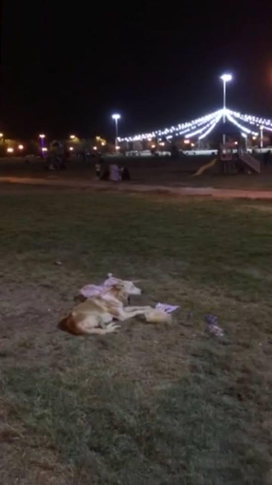 كلب ضال يهاجم محافظ سوهاج