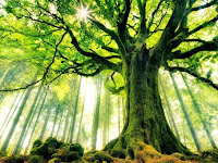 Menyibak Misteri Pohon Tuba Dalam Islam, Salah Satu Tumbuhan Di Surga