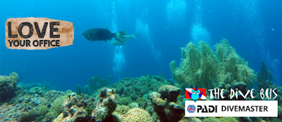 http://www.thedivebus.com/learn/keep-diving/go-pro-padi-dive-master/