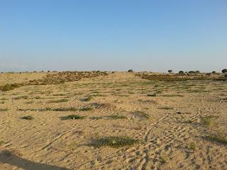 زراعة البطيخ فى سيناء على المطر