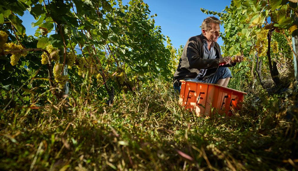 Reto Müller, Winzer aus Leytron VS und Vorsitzender der Fachgruppe Wein bei Bio Suisse