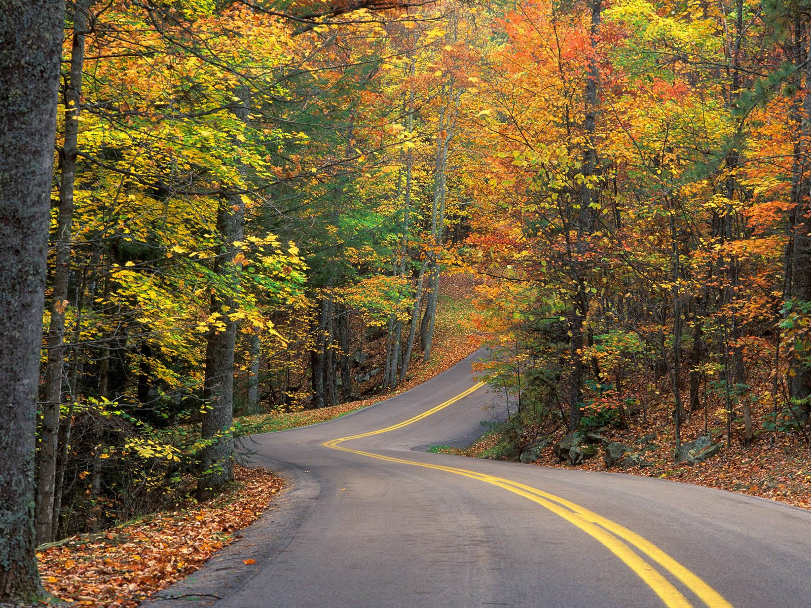 Latest Top HD Autumn Wallpapers | HDIMAGESPLUS