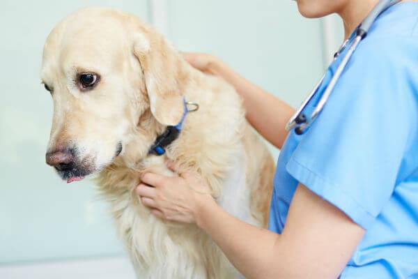 Dog Flu Symptoms And Treatment
