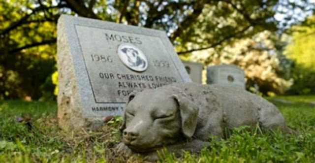 New Law Allows Pets To Be Buried With Their Owners