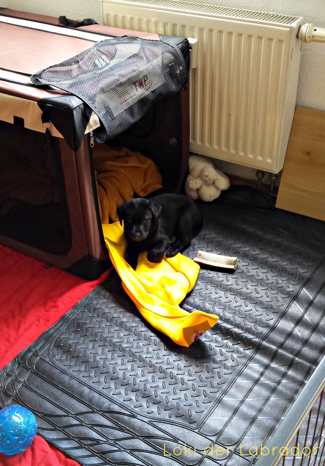 Welpe Schlafplatz Hundebox