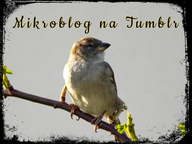 Relewantna - Mikroblog na Tumblr
