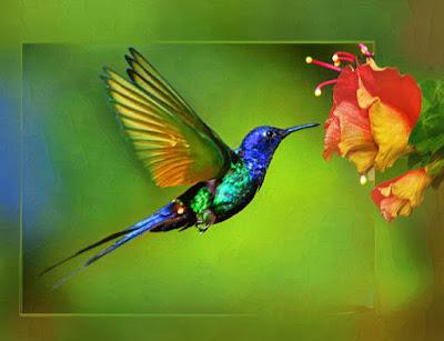 http://tipspetani.blogspot.com/2016/11/pesona-burung-kolibri-yang-kecil-tapi.html