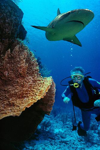 Top Scuba Diving: Top 10 Scuba Diving Spots Around The World
