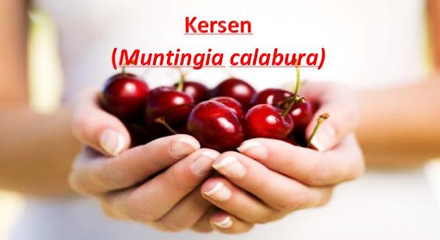 http://www.artikelsiana.com/