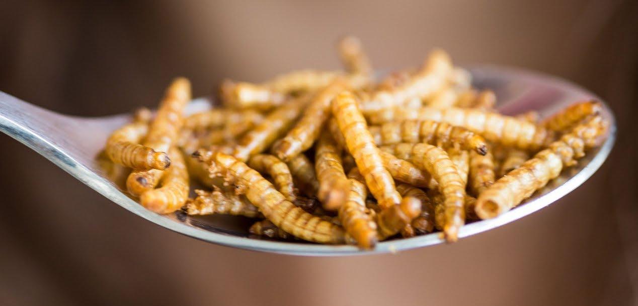 Il futuro è mangiare insetti, in 20 anni lasceremo la carne | Dieta Alimentare.
