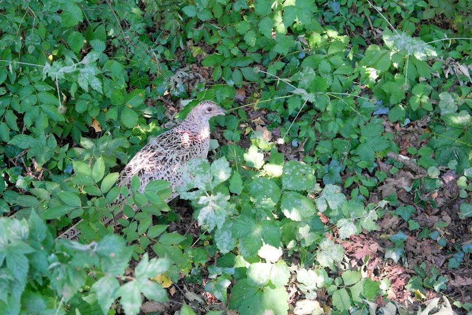 leighton moss rspb