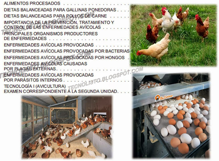 """Manual cria de pollos"""
