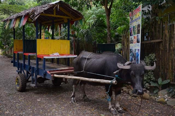 carabao cart ride