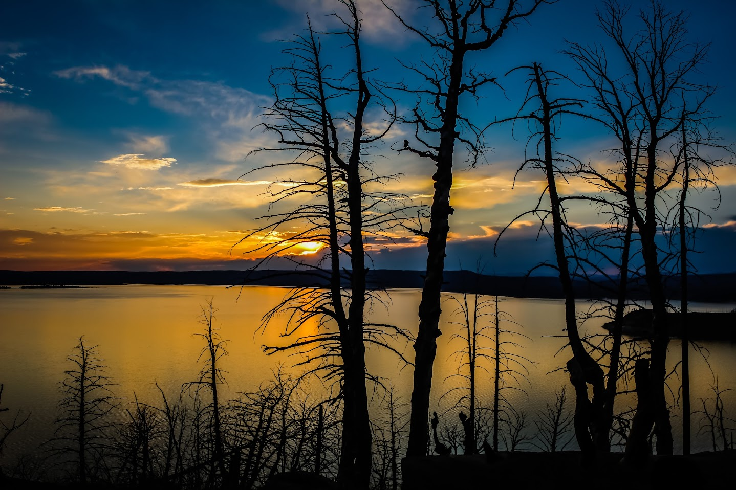 Silhouetted trees overlooking Yellowstone Lake at sunset