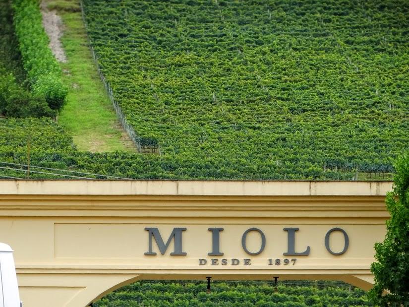 Vinícola Miolo - City Tour Vale dos Vinhedos, Rio Grande do Sul