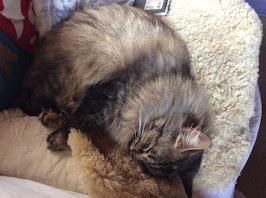 Oksa sleeping