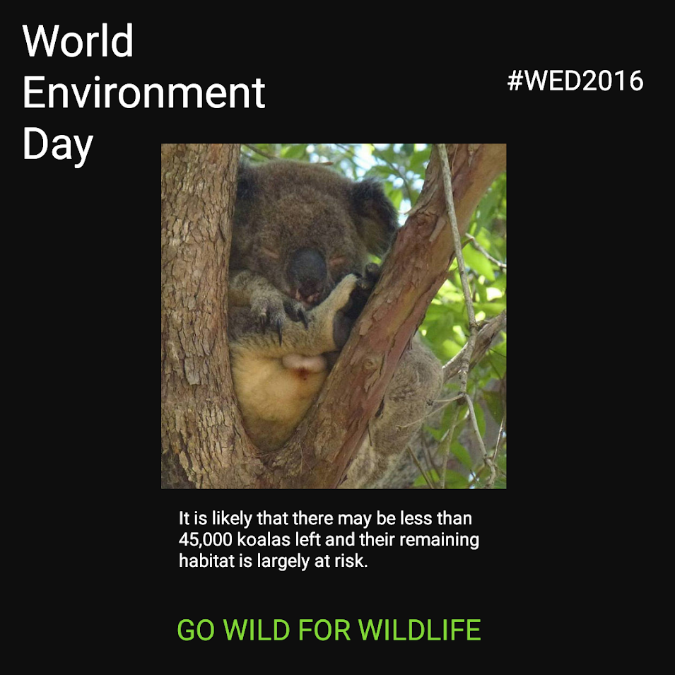 Koala World Environment Day