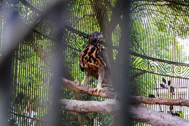 cintai coritos garden zoo