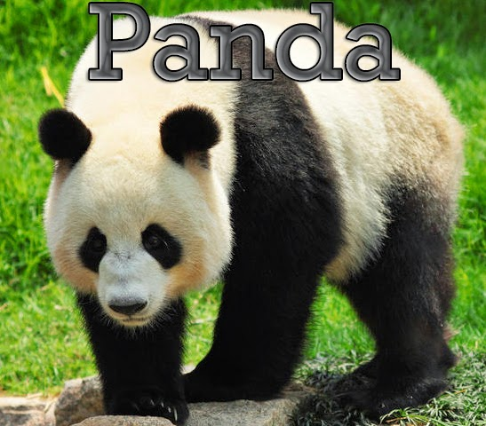 How to Recover from Google Panda Effect : eAskme