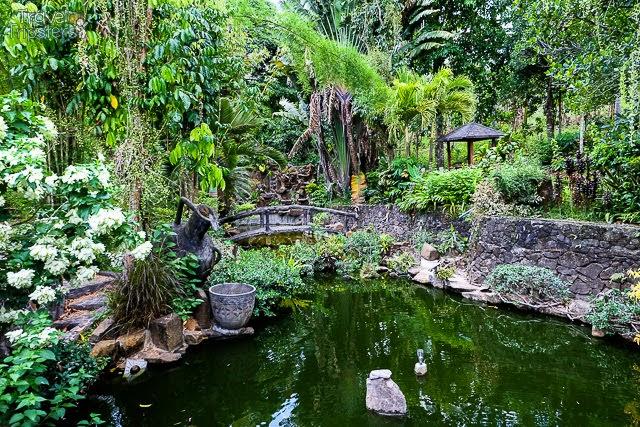 cintai coritos garden image