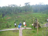 Arrozales, tegalalang, Bali, Indonesia, vuelta al mundo, round the world, La vuelta al mundo de Asun y Ricardo