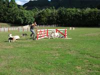 Perros pastores, Nueva Zelanda, vuelta al mundo, round the world, La vuelta al mundo de Asun y Ricardo
