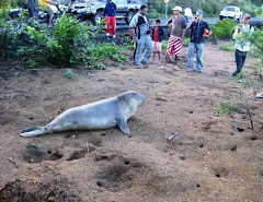 And A  Seal In Rodrigues....