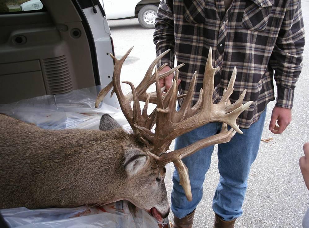 Buck Ass 35