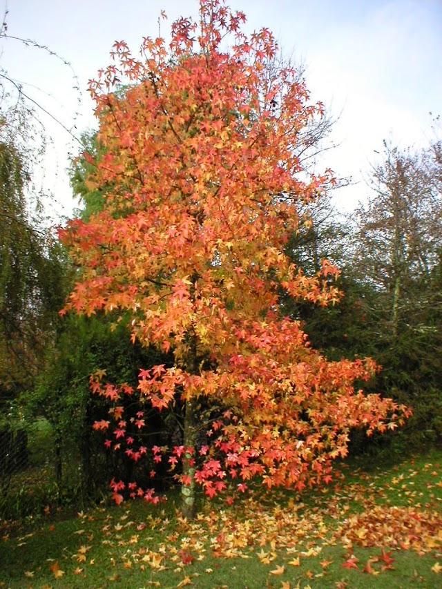 ¿Por qué los árboles cambian de color en otoño?