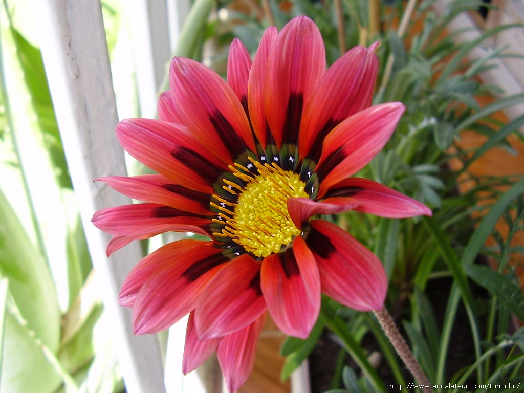 Clasificaci n de seres vivos for Plantas para veredas con flores