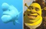 Ikan Aneh Menyeramkan Yang Mirip Shrek