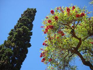 La flor nacional de Argentina. El ceibo.